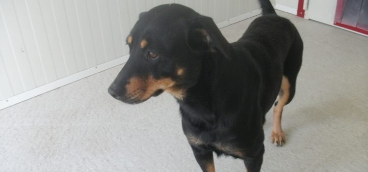 Terrier-Pinscher-Mix Daisy