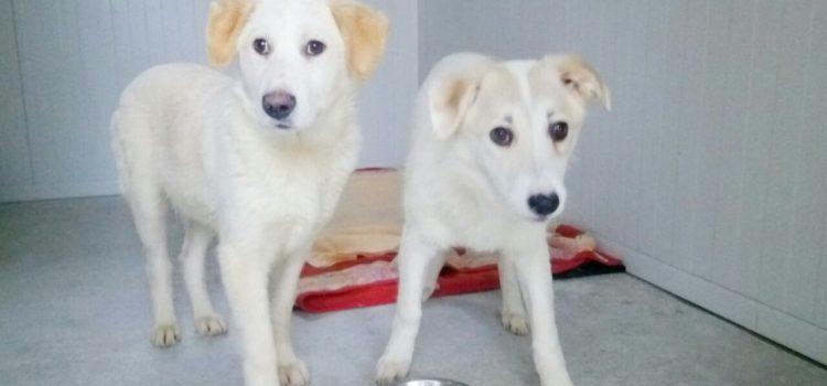 Labrador Mix Sally und Simon