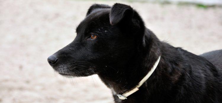 Labrador-Mix Mietzi