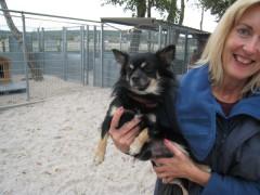 Chihuahua Sammy