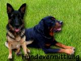 Hundevermittlung