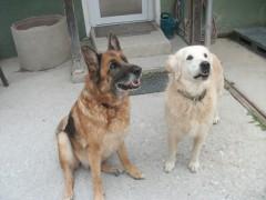 Zora und Benny