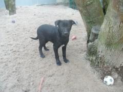 Sancho2