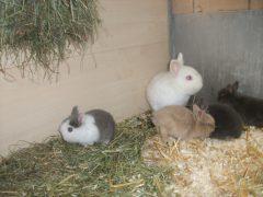 Flocke und ihre Babys