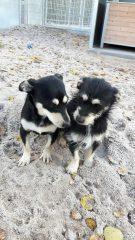 Benny und Balu