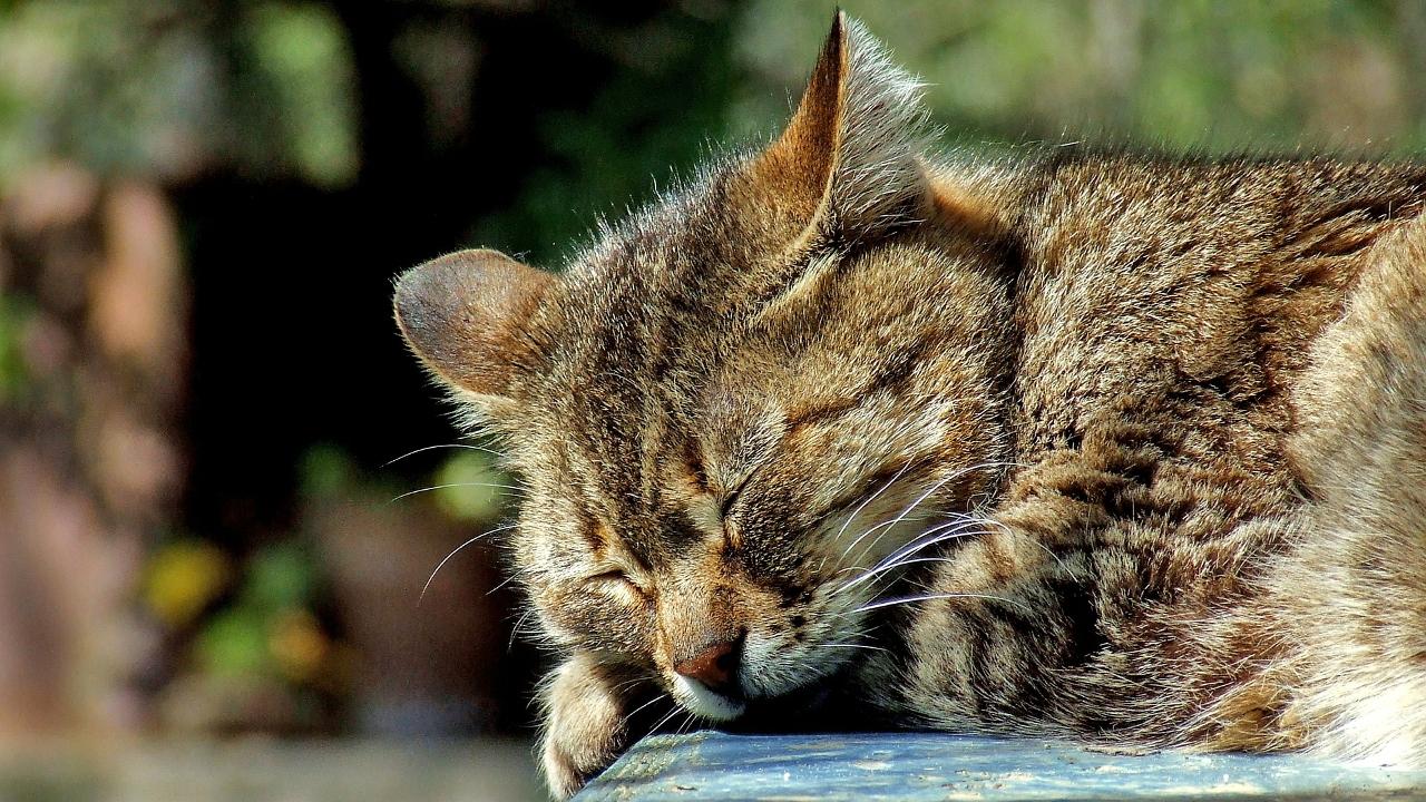 Katzen im Tierheim