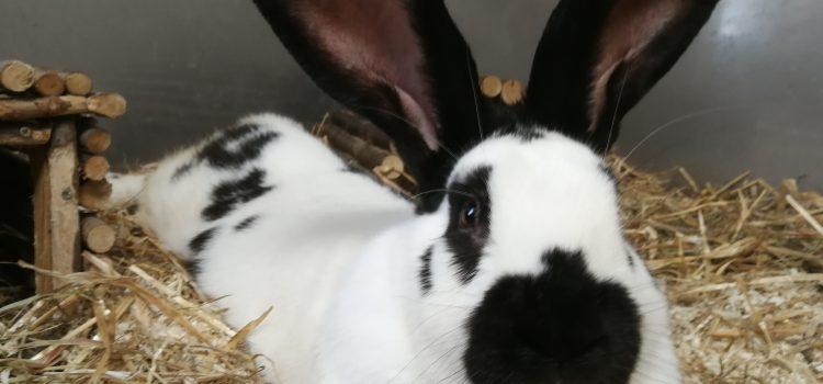 Kaninchen Anna und Peter