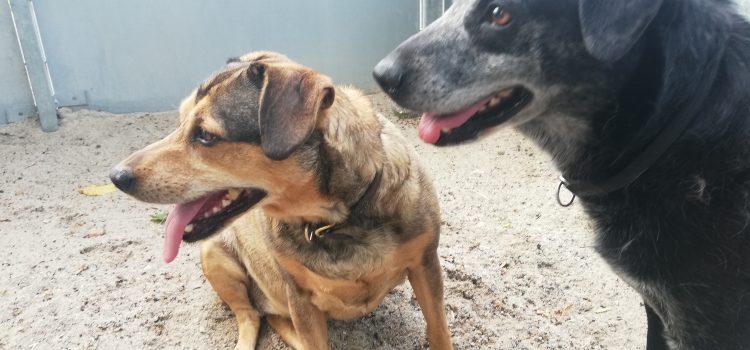 Dackel-Terrier Mix Anka