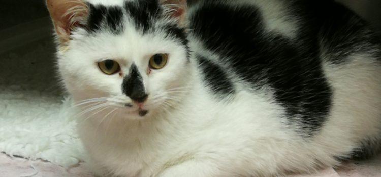 Pressemeldung Katzenkastrationsaktion
