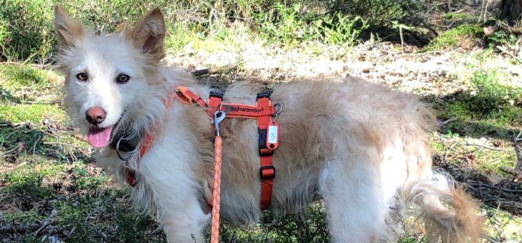 Terrier Mix Lija