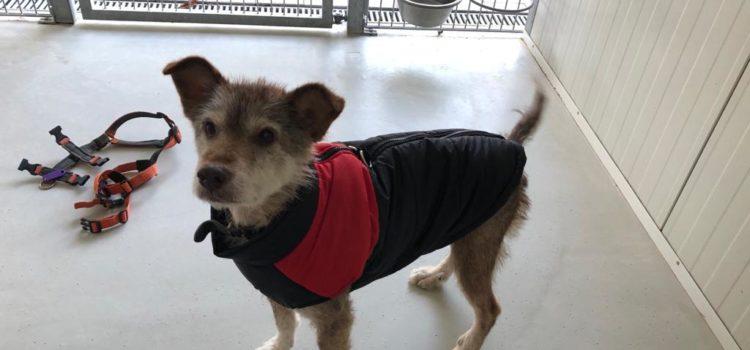 Terrier Mix Leo [vermittelt 07.11.2020]