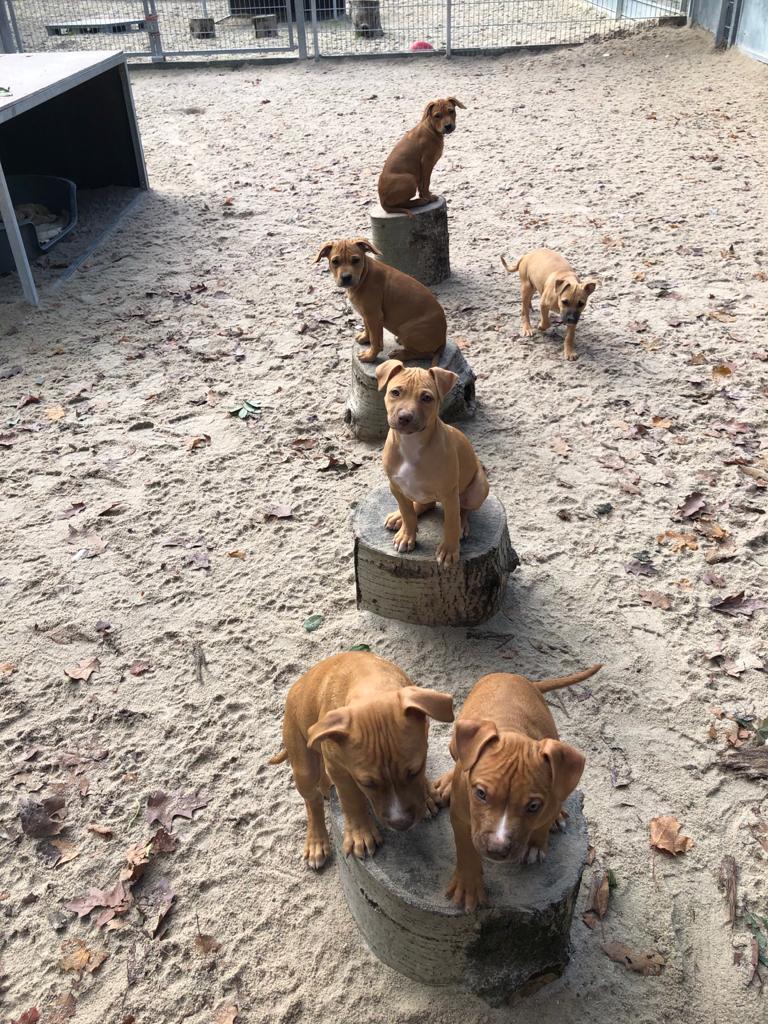 Hundeschule Schwandorf