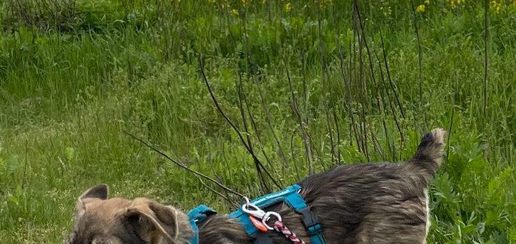 Mischlingshund Oskar [vermittelt 15.06.2021]