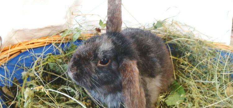 Zwergwidder Bunny, Franz und Schnuffel [alle vermittelt 10.07.2021]